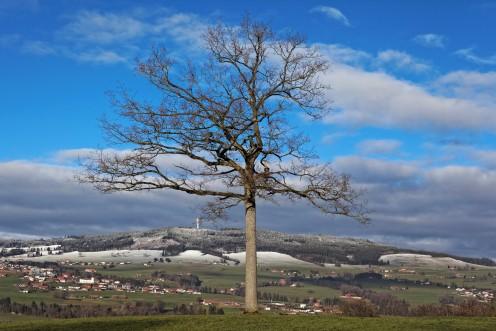 Le Mont Gibloux vu du grand chêne-maître d'Echarlens