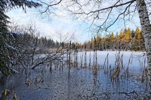L'étang des Bugnons, lieu de contemplation