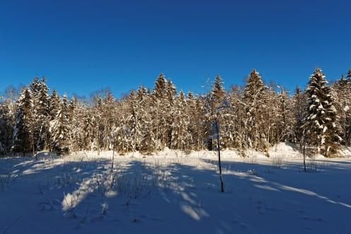 L'étangs des Bugnons gelé