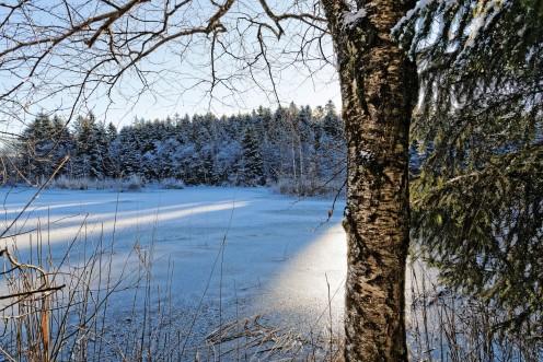 L'étang des Bugnons glacé ce matin au soleil levant