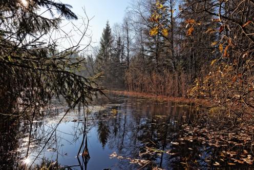 L'étang des Bugnons aux Monts-de-Riaz invite à la rêverie