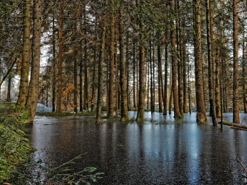 Forêt inondée par l'étang des Bugnons