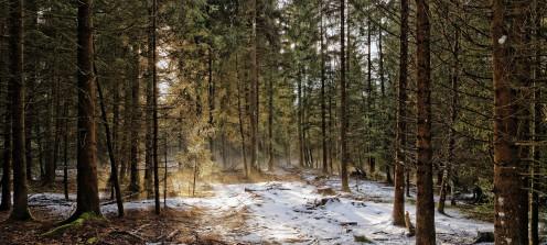 Forêt près de l'étang des Gurles