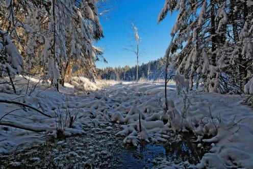 Le poids de la neige recouvre l'étang des Bugnons