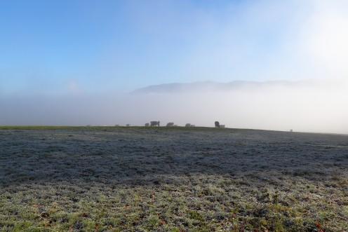 Quelques vaches dans le matin glacial