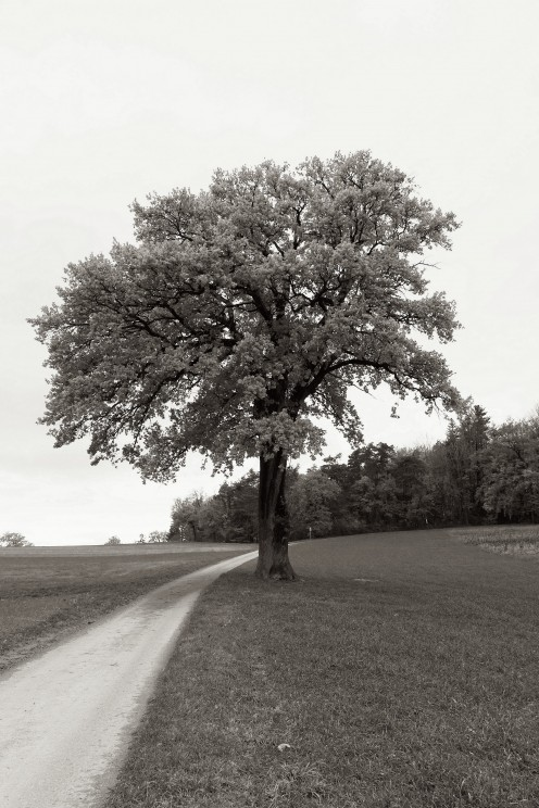 arbre-grangeneuve