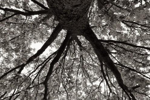 arbre-manteau