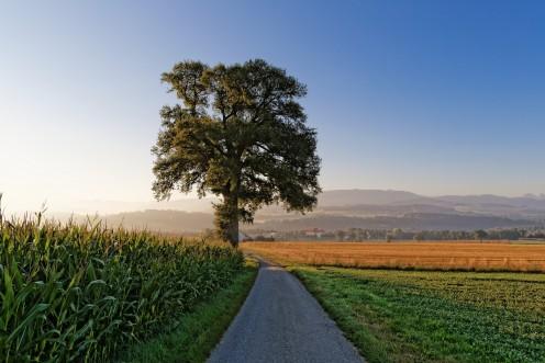 grangeneuve-arbre-pre