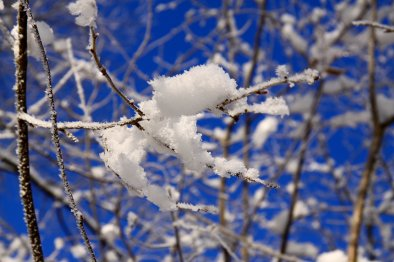 neige-branches-hiver