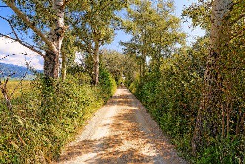 chemin-ile-saint-pierre
