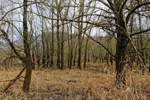 arbres-roseaux-lac