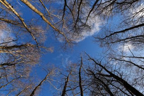 poumon-racines-ciel