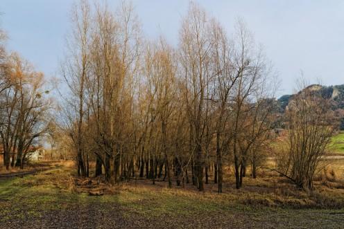 terrain-marecageux-morlon