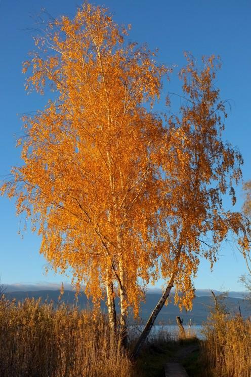 arbre-soleil-couchant