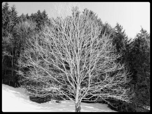 arbre-lac-noir