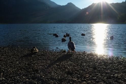 lac-noir-canards-c2