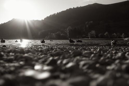 lac-noir-canards-m1