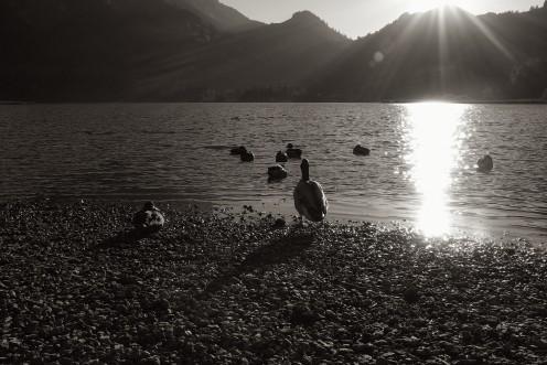 lac-noir-canards-m2