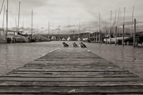 canards-port-morat