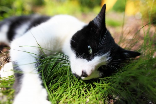 chat-mouch-jardin