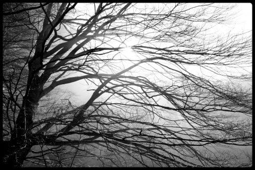 arbre-lac-perolles
