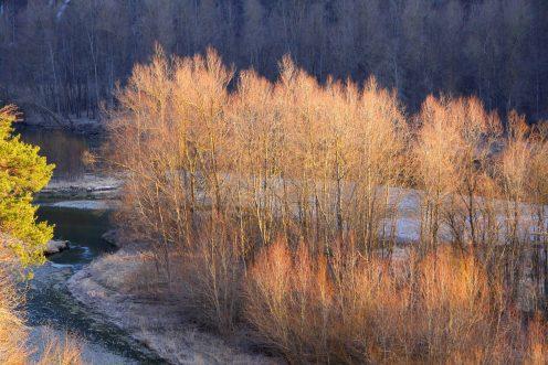 arbres-soleil-perolles