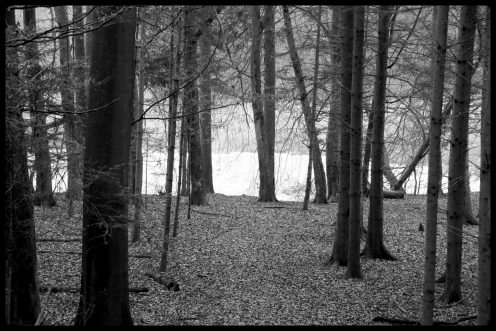 foret-lac-perolles