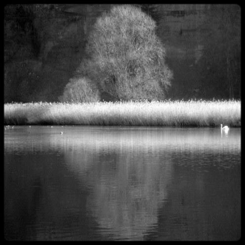 lac-perolles-arbre