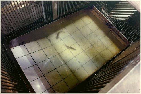 lac-perolles-ascenseur-poissons