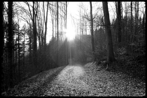 sentier-foret-perolles