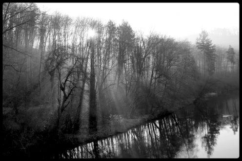 soleil-arbres-perolles