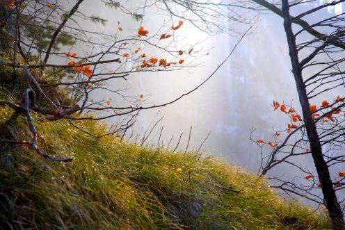 vegetation-lac-perolles