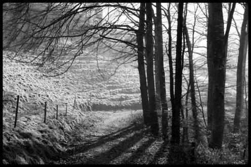sentier-forestier-planafaye